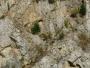Octombrie verde